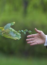 5 Schritte zum Aufbau einer nachhaltigen Lieferkette